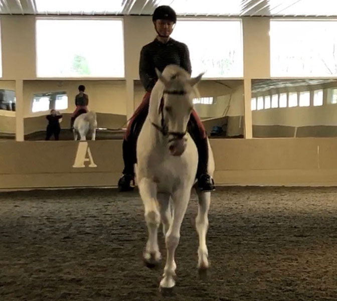 dressage horse training horse boarding orange county ny