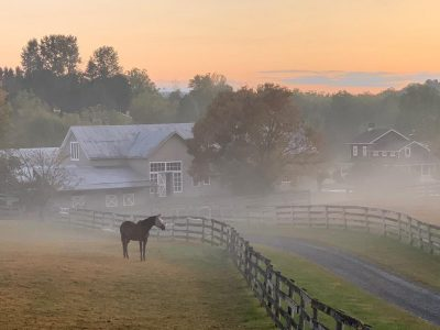dressage horse training boarding orange county ny